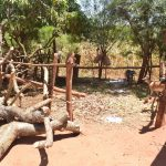 The Water Project: Ngitini Community E -  Livestock Pen