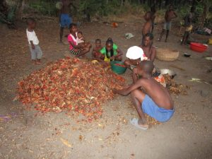 The Water Project:  Children Pick Palm Kernel