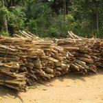 The Water Project: Lokomasama, Bompa, DEC Bompa Primary School -  Fire Wood