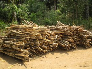 The Water Project:  Fire Wood