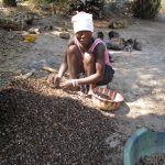 The Water Project: Lungi, Yaliba Village -  Woman Processing Palm Karnel