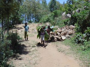 The Water Project:  Bringing Banana Leaves To Cover Drying Cement