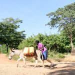 The Water Project: Kasekini Community -  Donkey Carries Water