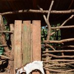 The Water Project: Kasekini Community -  Livestock Pen