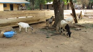 The Water Project:  Livestock