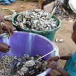 The Water Project: Lokomasama, Kamayea, Susu Community & Church -  Woman Processing Seashells