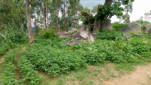 The Water Project:  Kenya School Farm