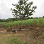 The Water Project: Mukhuyu Community, Kwawanzala Spring -  Finished Spring