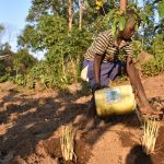 The Water Project: Munenga Community, Burudi Spring -  Watering Grass Near Spring To Prevent Soil Erosion