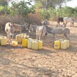 The Water Project: Nyanyaa Secondary School -  Donkeys And Containers At The Riverbed