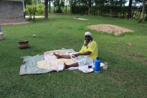 The Water Project:  Removing Maize Kernels From The Cob