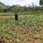 The Water Project: Malimali Community, Shamala Spring -  Matende On Her Collard Greens Farm