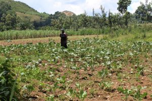 The Water Project:  Matende On Her Collard Greens Farm