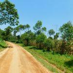The Water Project: Ewamakhumbi Community, Mukungu Spring -  Road To Ewamakhumbi