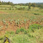 The Water Project: Sambaka Community, Sambaka Spring -  Farm