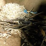 The Water Project: Kapkures Primary School -  Firewood For Cooking