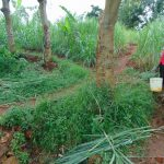 The Water Project: Namarambi Community, Iddi Spring -  Carrying Water Home