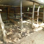 The Water Project: Emurumba Community, Makokha Spring -  Cow Shed