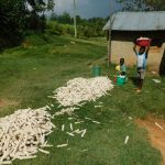 The Water Project: Emurumba Community, Makokha Spring -  Kids With Maize Harvest