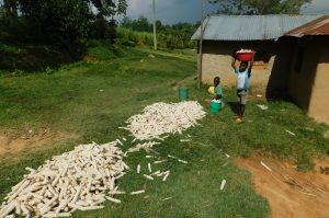 The Water Project:  Kids With Maize Harvest