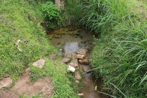 The Water Project:  Unprotected Lumbasi Spring