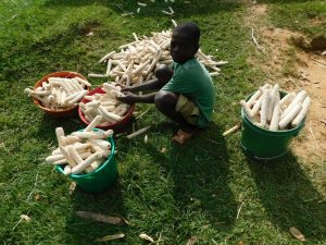 The Water Project:  Child With Maize Cobs