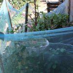 The Water Project: Kimarani Community, Kipsiro Spring -  Kitchen Garden