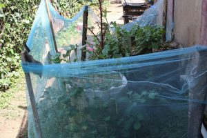 The Water Project:  Kitchen Garden
