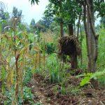 The Water Project: Namarambi Community, Iddi Spring -  Beehive On A Farm