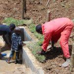 The Water Project: Shamiloli Community, Kwasasala Spring -  Artisan Helps Plant Grass Along Spring Box