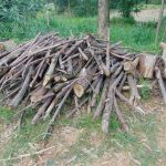 The Water Project: Bukhaywa Community, Ashikhanga Spring -  Stack Of Firewood