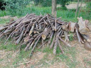 The Water Project:  Stack Of Firewood