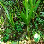 The Water Project: Ewamakhumbi Community, Mukungu Spring -  Springs Eye