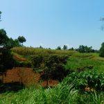 The Water Project: Ewamakhumbi Community, Mukungu Spring -  Community Farms