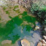 The Water Project: Mukangu Community, Metah Spring -  Algae In The Water