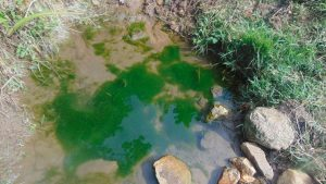 The Water Project:  Algae In The Water