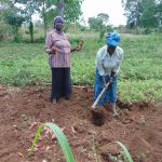 The Water Project: Bukhaywa Community, Ashikhanga Spring -  Harvesting Sweet Potatoes