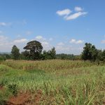 The Water Project: Kalenda A Community, Webo Simali Spring -  Sugarcane And Maize Fields