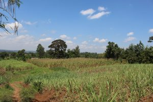 The Water Project:  Sugarcane And Maize Fields