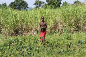 The Water Project:  Woman Stands In Her Sugarcane Field