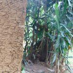 The Water Project: Mubinga Community, Mulutondo Spring -  Bathing Shelter Next To Latrine