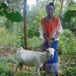 The Water Project: Mubinga Community, Mulutondo Spring -  Woman And Goat