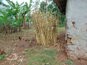 The Water Project:  Bathroom Made With Maize Stems