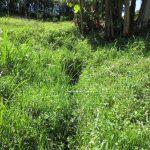 The Water Project: Emmachembe Community, Magina Spring -  Bush Where Spring Originates