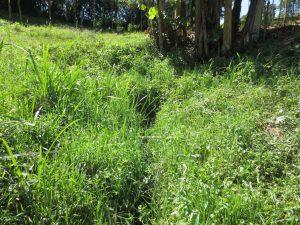 The Water Project:  Bush Where Spring Originates