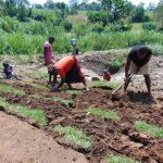 The Water Project: Shihungu Community, Shihungu Spring -  Grass Planting