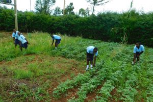 The Water Project:  Students On The School Farm