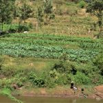 The Water Project: Masola Community A -  Thriving Crops
