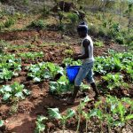 The Water Project: Masaani Community -  Thriving Crops