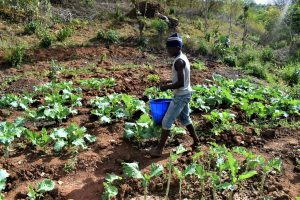 The Water Project:  Thriving Crops